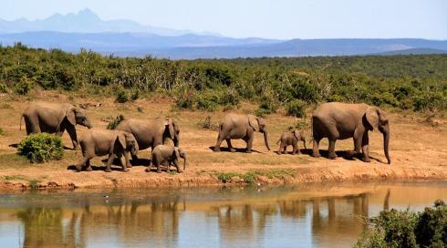 elephant-279505_960_720.jpg