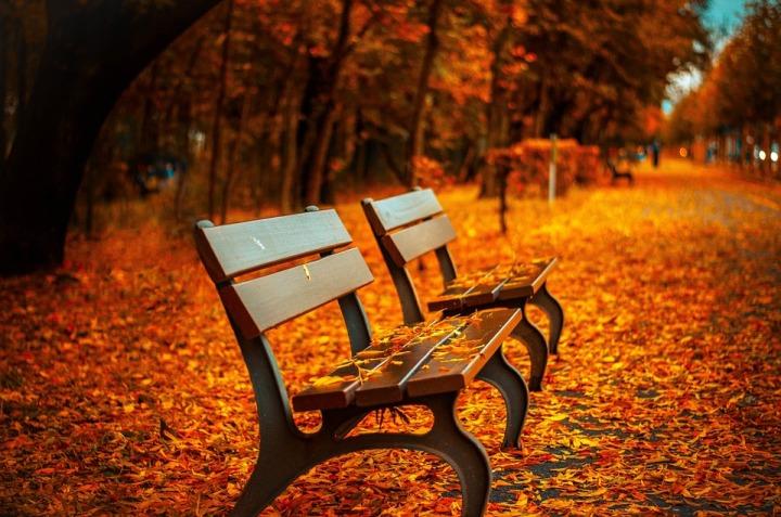bench-560435_960_720.jpg